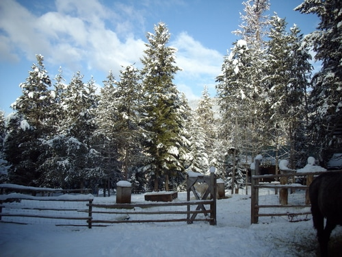 Trees covered in snow on Joybilee Farm