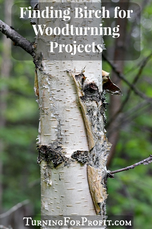 Finding Birch for Woodturning Projects