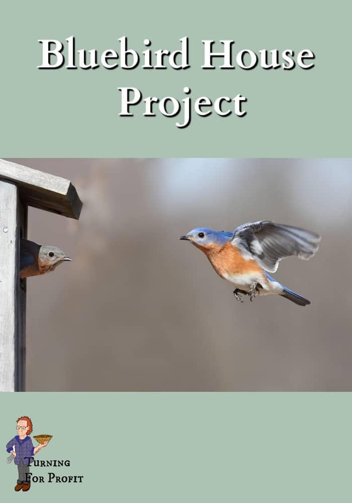 Bluebird flying towards bird house with bluebird looking out