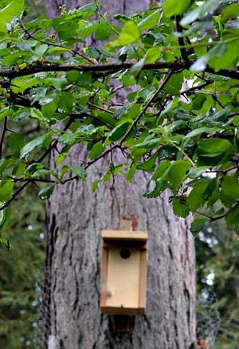 Bluebird house changed to Wren house from slight adjustments
