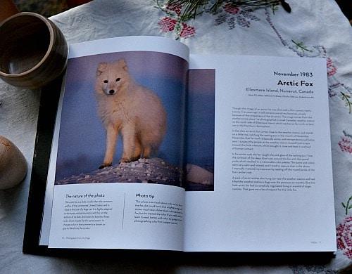 Photographs Arctic Fox